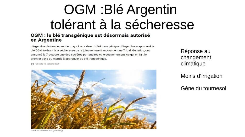 OGM :Blé Argentin tolérant à la sécheresse Répo...