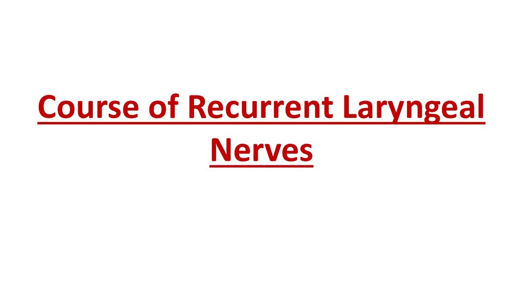 Course of Recurrent Laryngeal Nerves