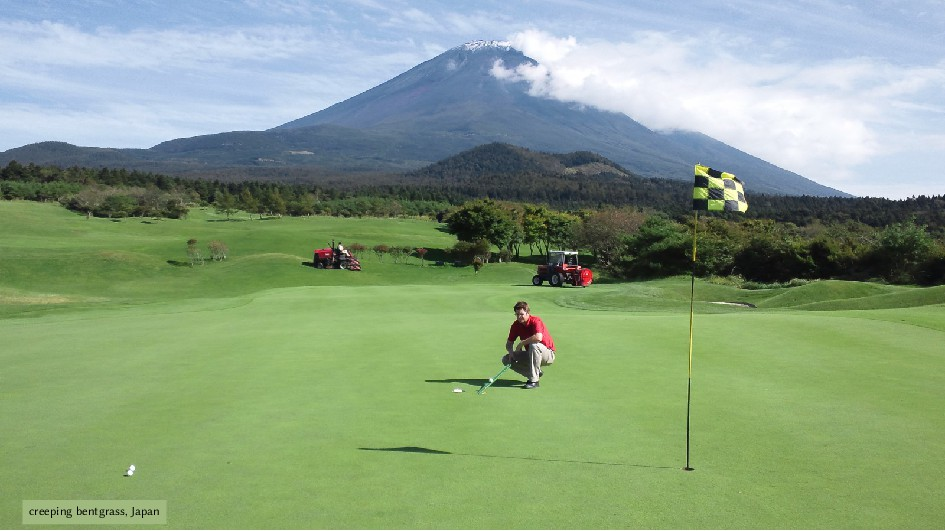 creeping bentgrass, Japan
