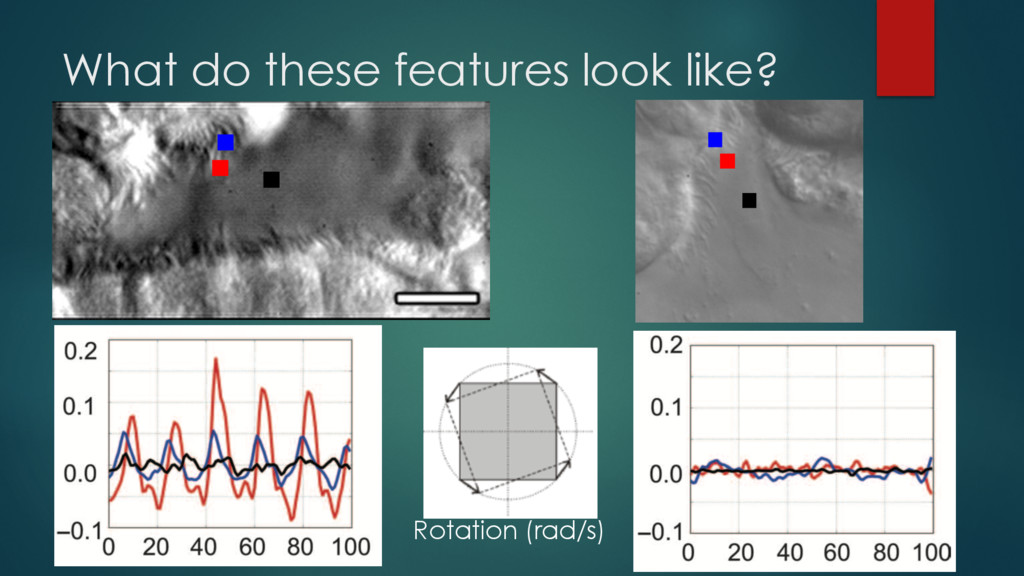 What do these features look like? Rotation (rad...