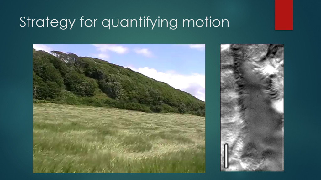 Strategy for quantifying motion