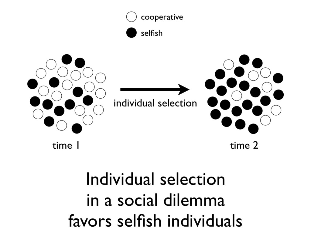 Individual selection in a social dilemma favors...