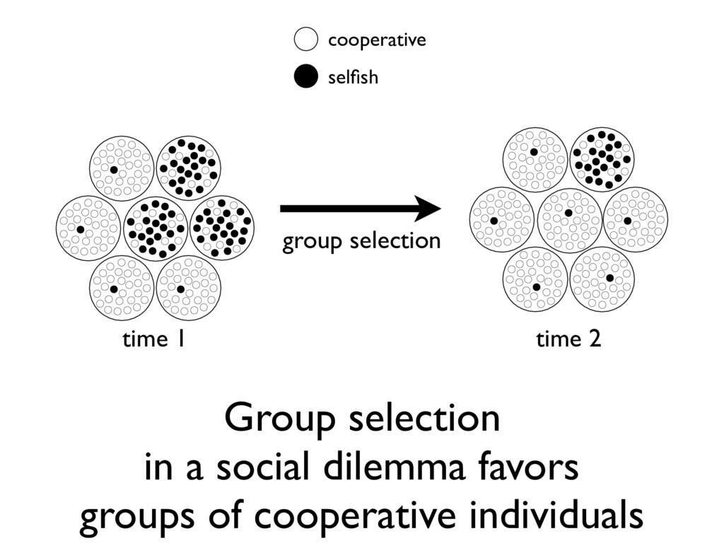 Group selection in a social dilemma favors grou...