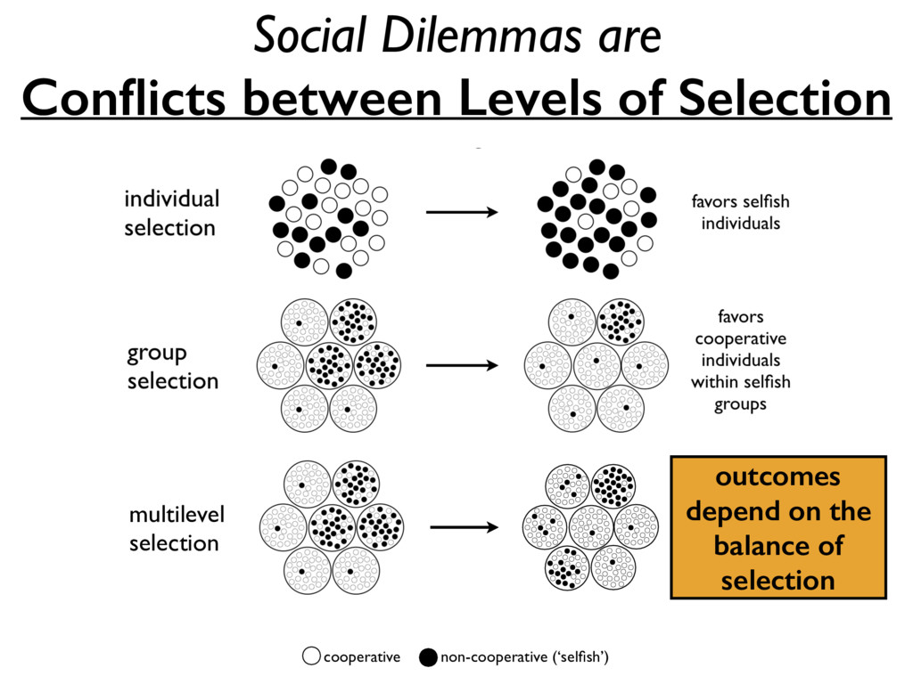 outcomes depend on the balance of selection Soc...