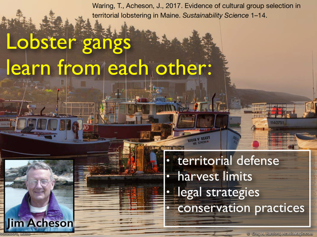 Lobster gangs learn from each other: • territor...