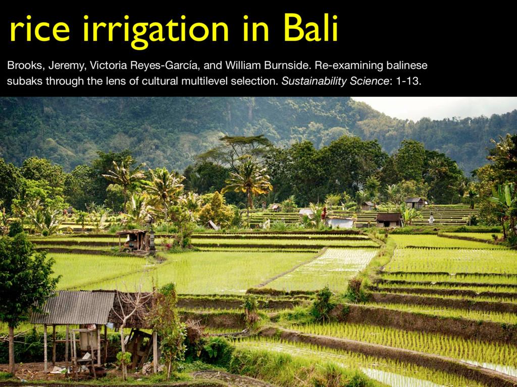 rice irrigation in Bali Brooks, Jeremy, Victori...
