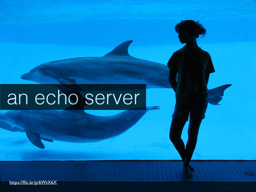 an echo server https://flic.kr/p/6WtX6X