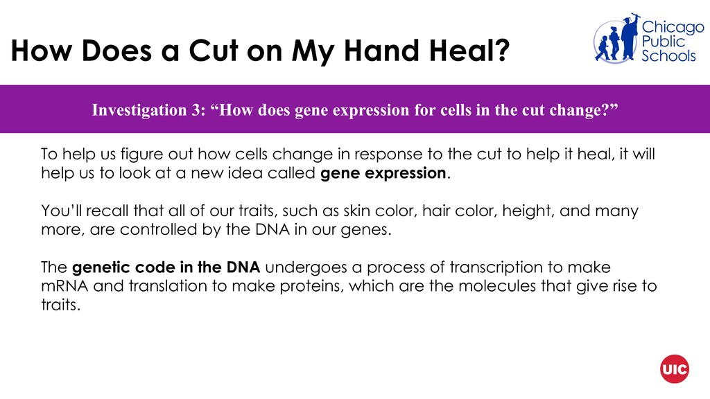 How Does a Cut on My Hand Heal? Investigation 3...