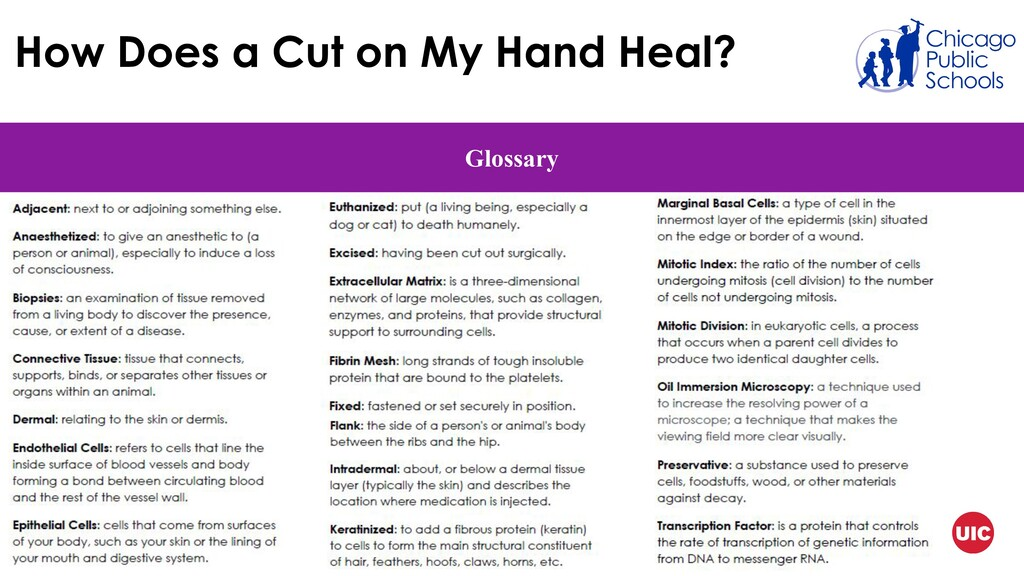 How Does a Cut on My Hand Heal? Glossary