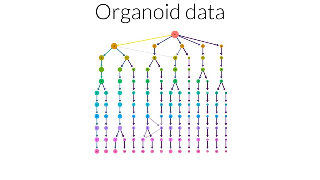 Organoid data