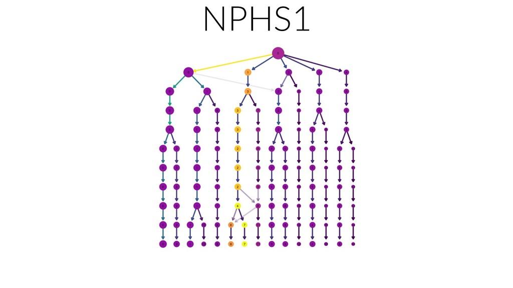 NPHS1