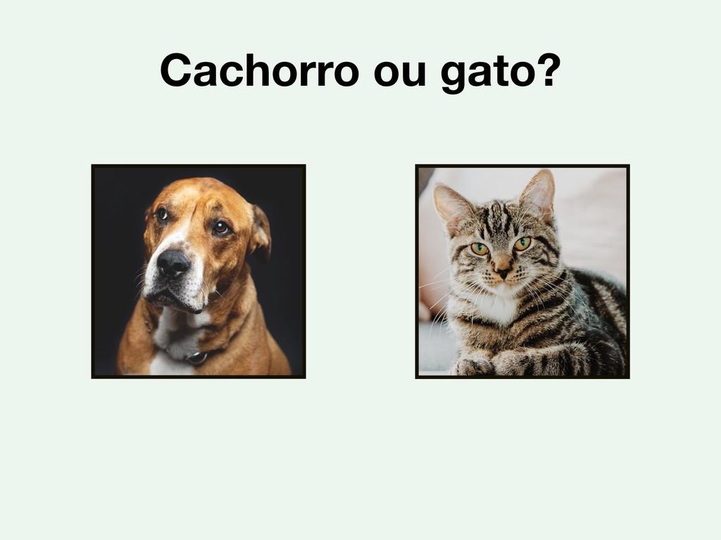Cachorro ou gato?