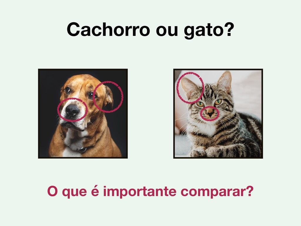 Cachorro ou gato? O que é importante comparar?