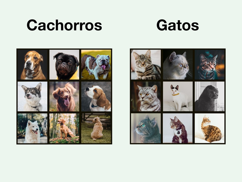 Cachorros Gatos
