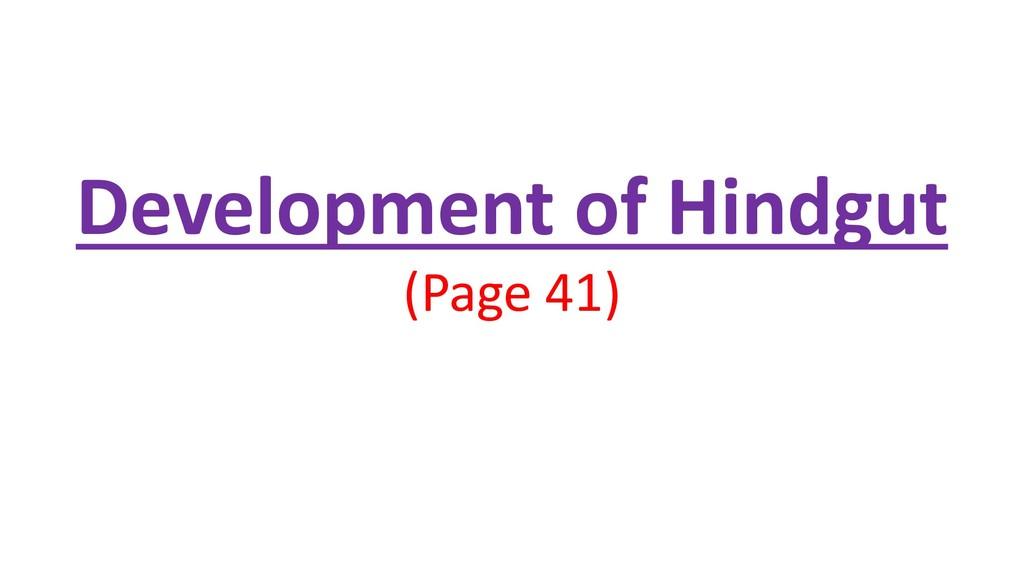 Development of Hindgut (Page 41)