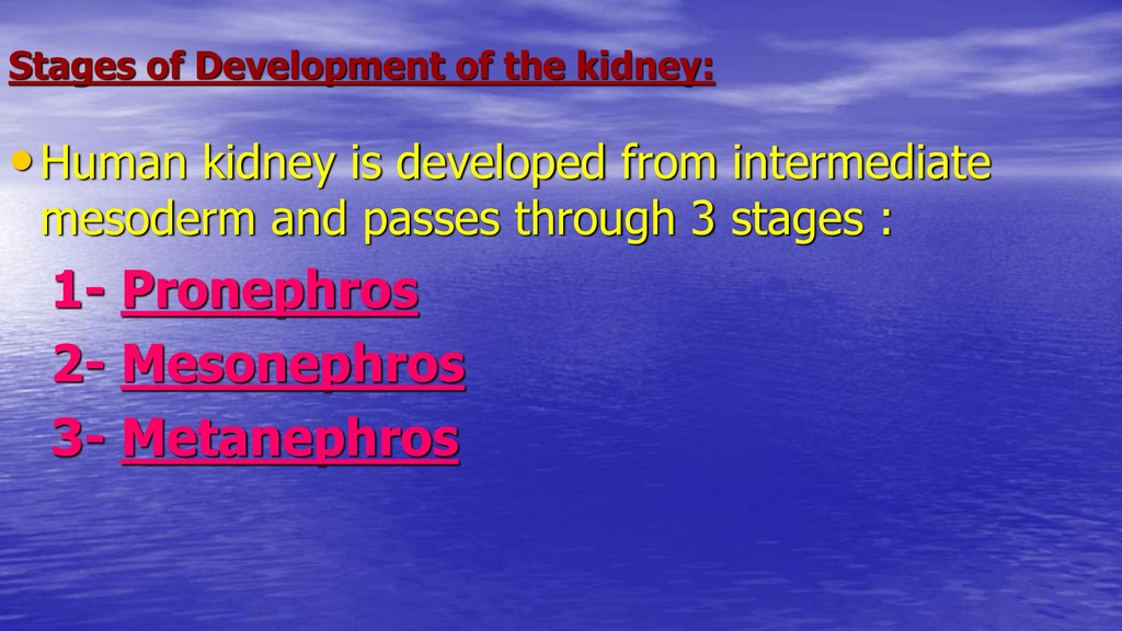 Stages of Development of the kidney: •Human kid...