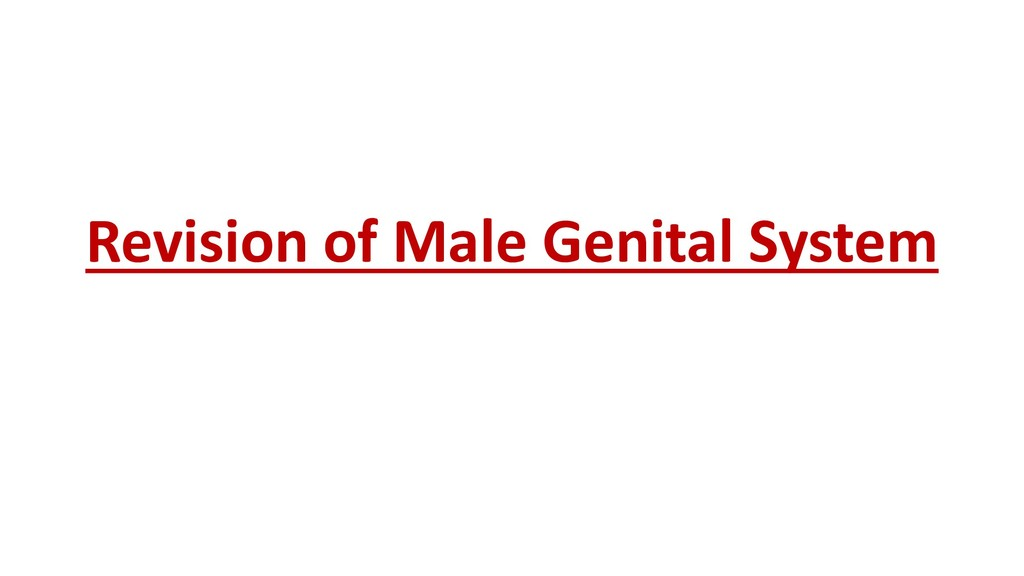 Revision of Male Genital System