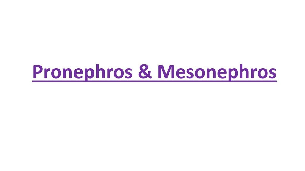 Pronephros & Mesonephros