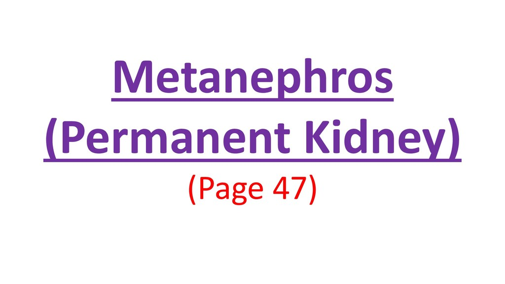 Metanephros (Permanent Kidney) (Page 47)