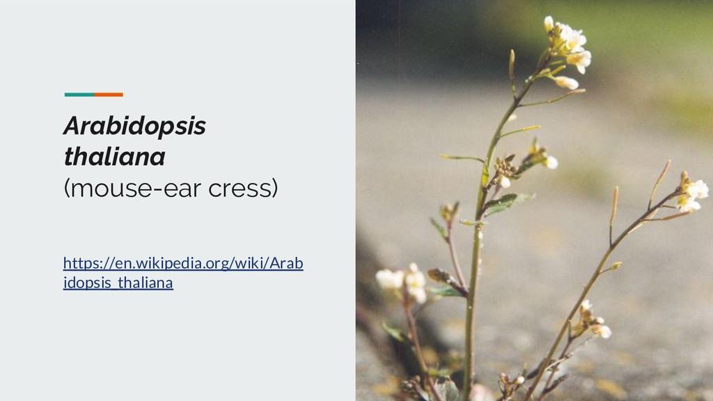 Arabidopsis thaliana (mouse-ear cress) https://...