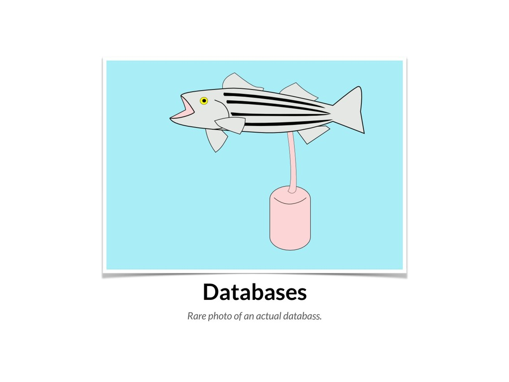 Databases Rare photo of an actual databass.