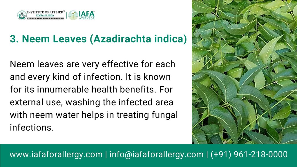 Neem leaves are very effective for each and eve...