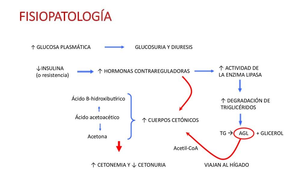 ↑ GLUCOSA PLASMÁTICA FISIOPATOLOGÍA GLUCOSURIA ...