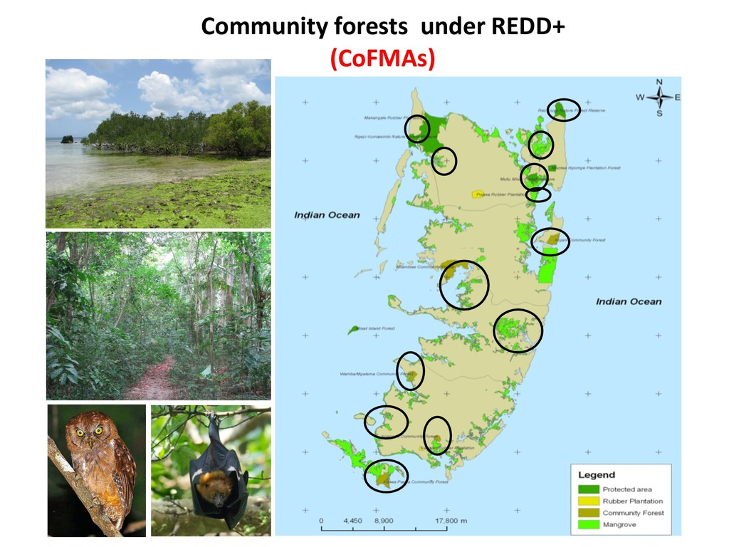 Community forests under REDD+ (CoFMAs)