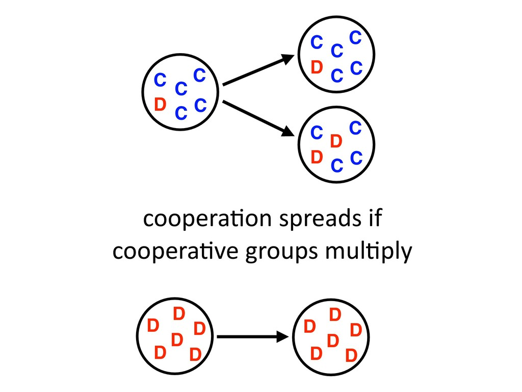 coopera,on spreads if coopera,ve groups mul,ply...