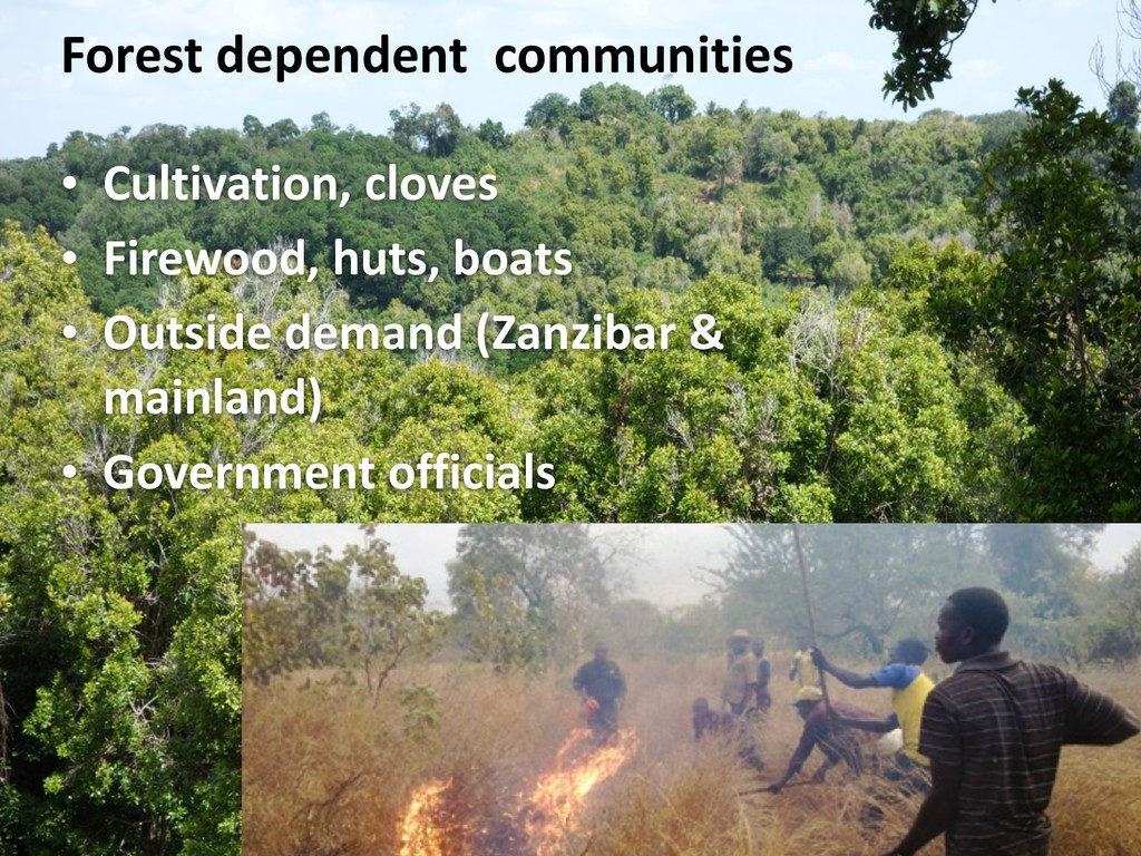 Forest dependent communities • Cultivation, clo...