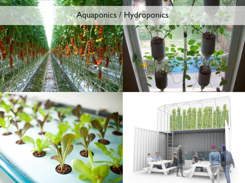 Aquaponics / Hydroponics
