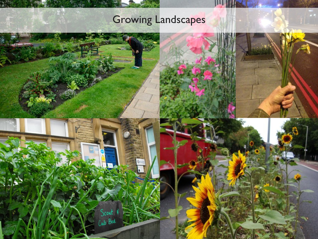 Growing Landscapes
