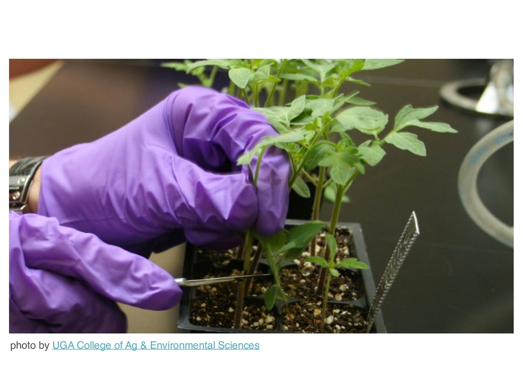 photo by UGA College of Ag & Environmental Scie...