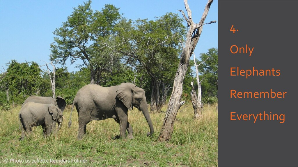 4. Only Elephants Remember Everything © Photo b...