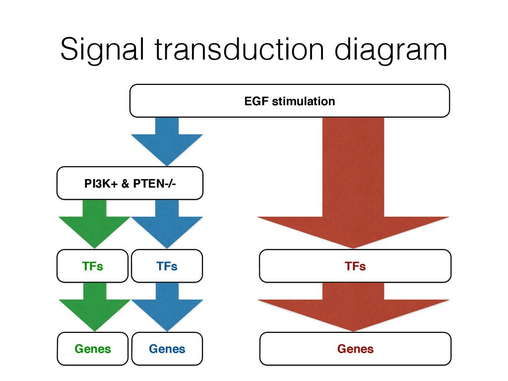 Signal transduction diagram PI3K+ & PTEN-/- EGF...