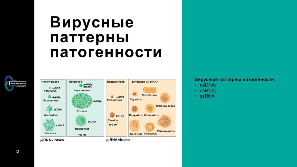 12 Вирусные паттерны патогенности Вирусные патт...
