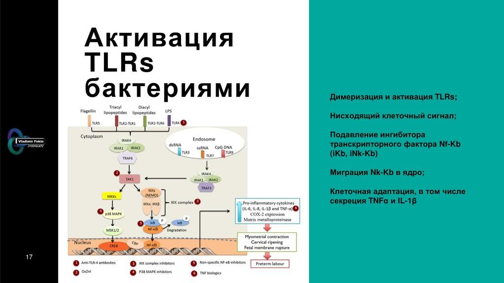 17 Активация TLRs бактериями Димеризация и акти...