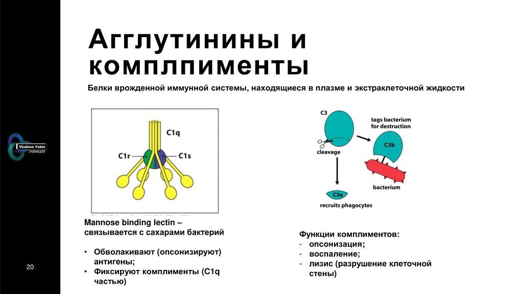 20 Агглутинины и комплпименты Белки врожденной ...