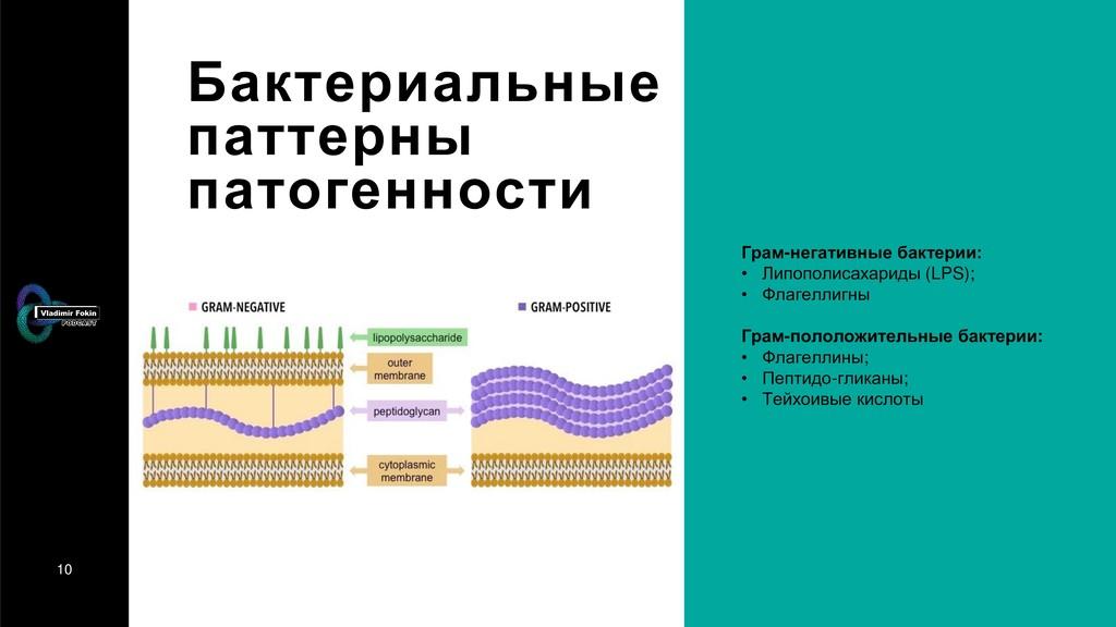 10 Бактериальные паттерны патогенности Грам-нег...