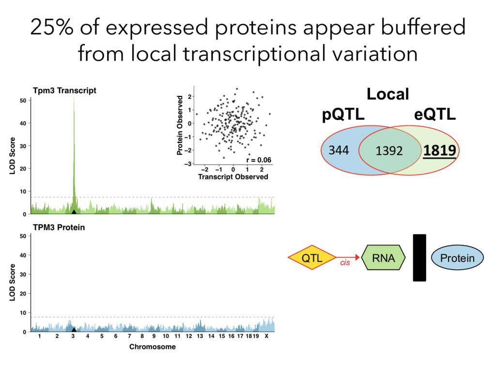 25% of expressed proteins appear buffered from ...