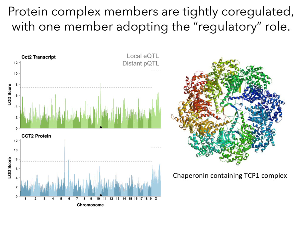 Protein complex members are tightly coregulated...