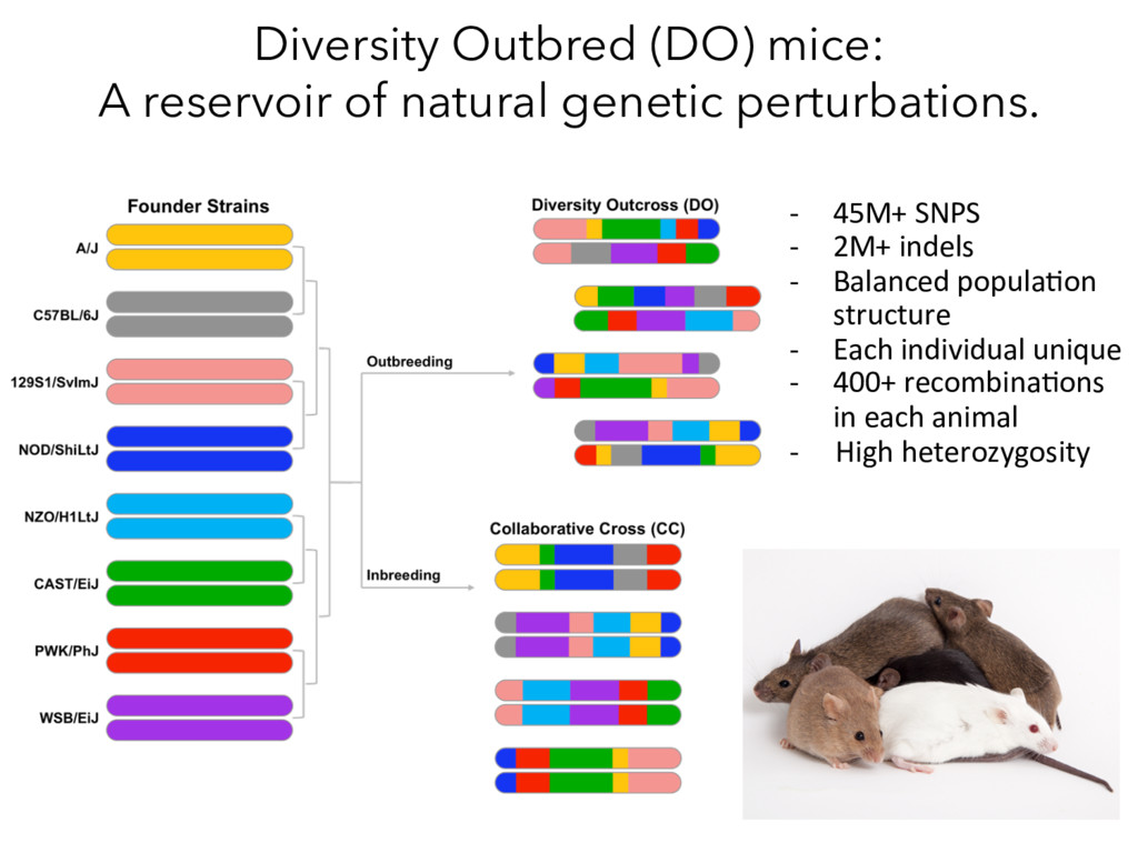 Diversity Outbred (DO) mice: A reservoir of nat...