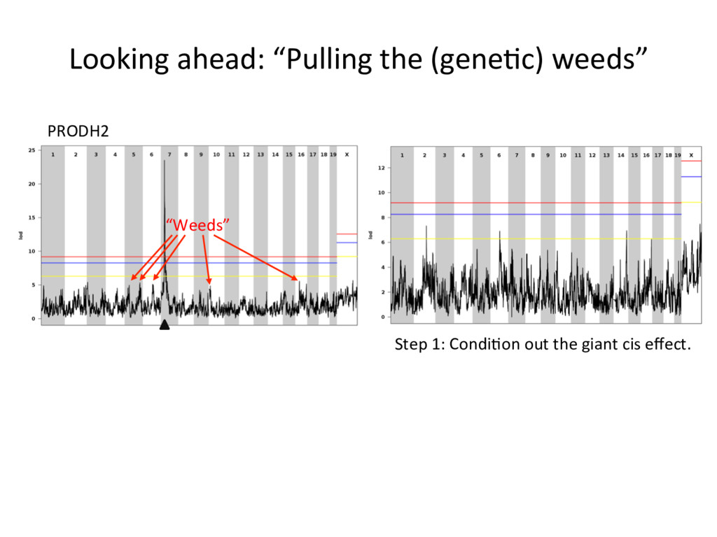 "Looking ahead: ""Pulling the (gene)c) weeds"" PRO..."