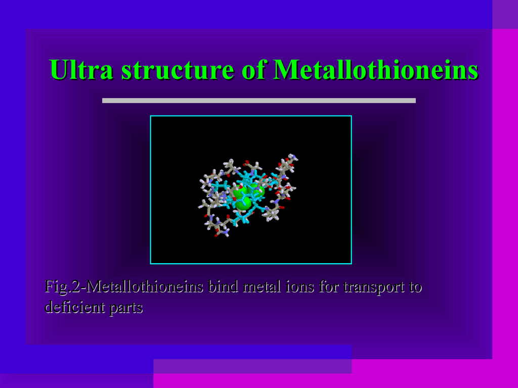 Ultra structure of Metallothioneins Ultra struc...