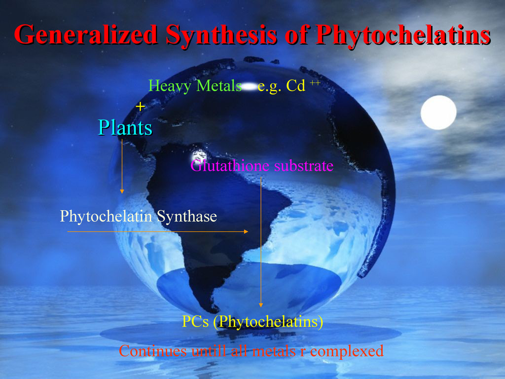 Plants Plants Heavy Metals Phytochelatin Syntha...