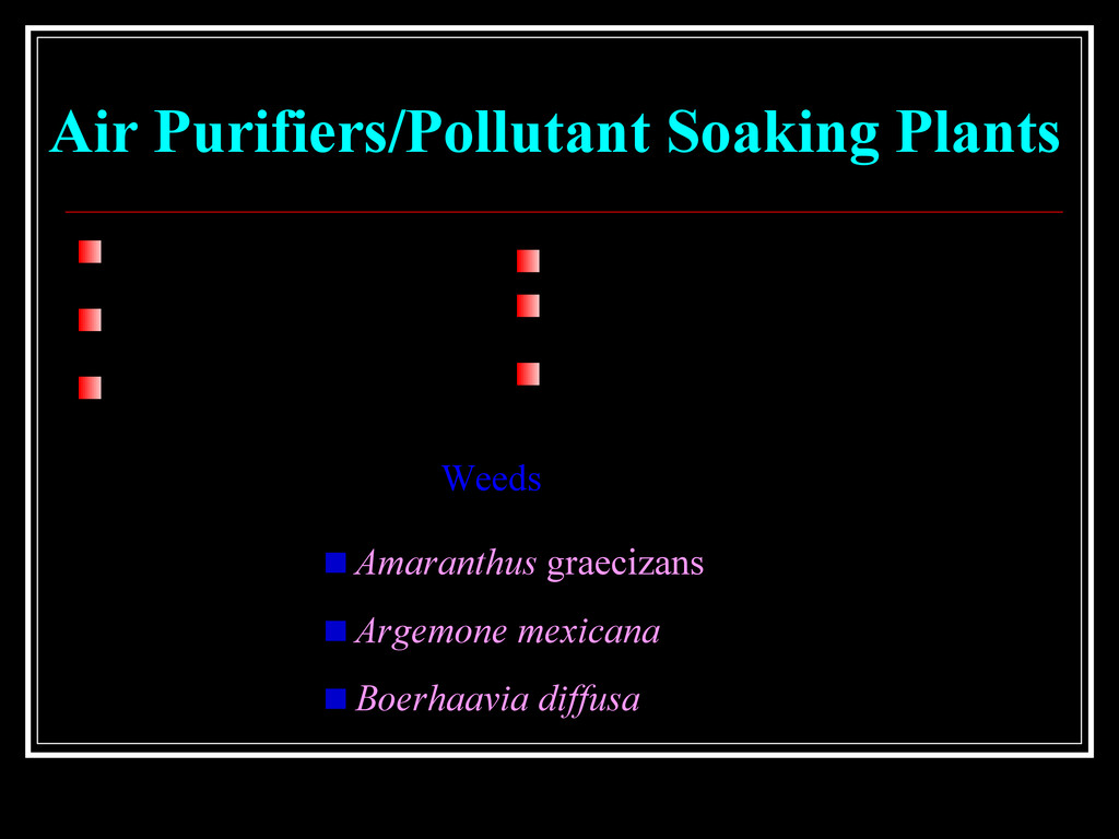 Air Purifiers/Pollutant Soaking Plants Air Puri...