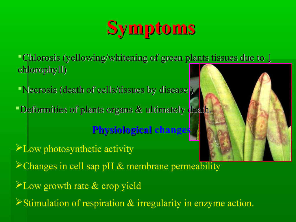 Symptoms Symptoms Chlorosis (yellowing/whiteni...
