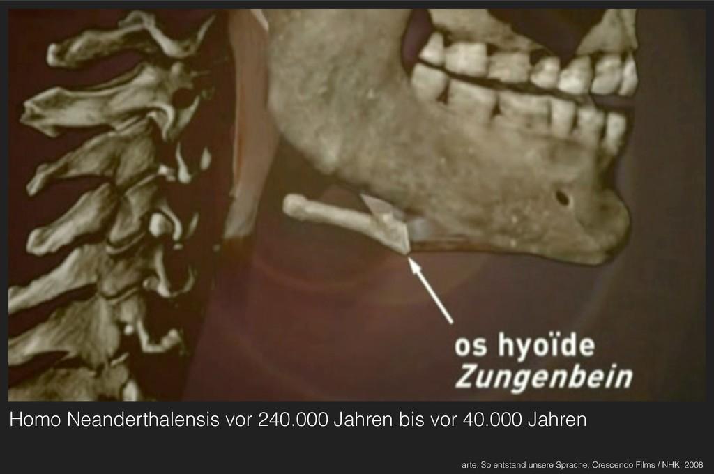 Homo Neanderthalensis vor 240.000 Jahren bis vo...