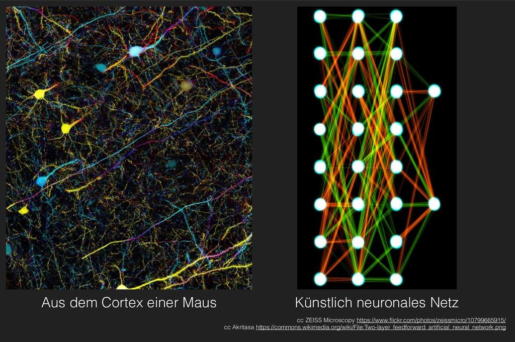 Aus dem Cortex einer Maus cc ZEISS Microscopy h...