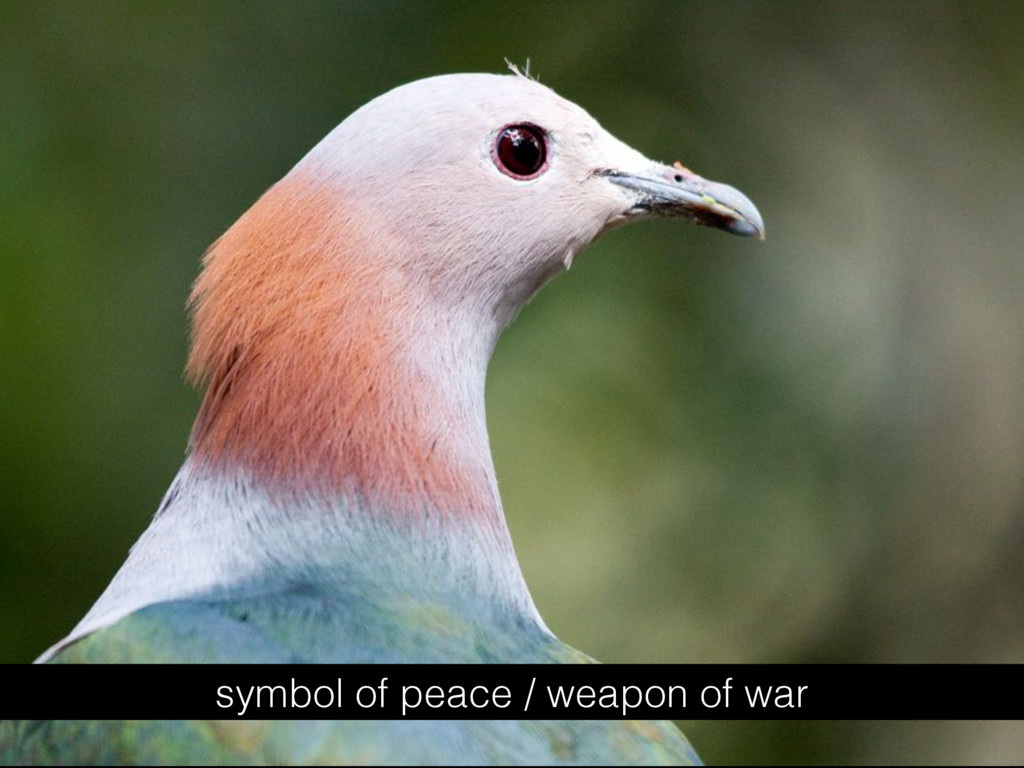 symbol of peace / weapon of war